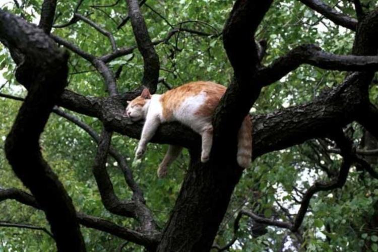 Самые смешные коты интернета