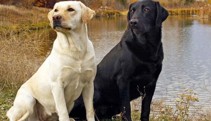 Самые опасные и самые дружелюбные породы собак