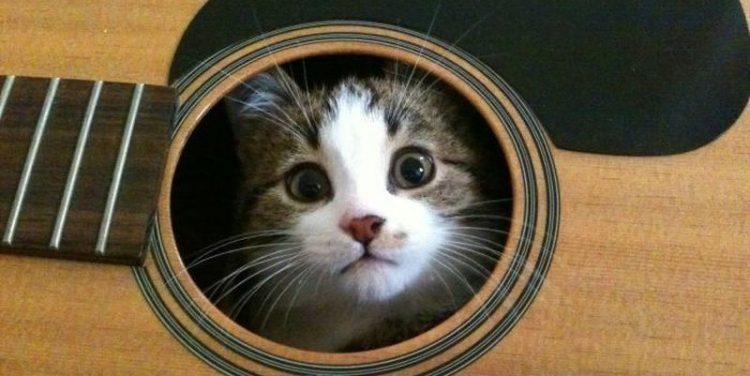 Фото котов, которые гармонично вписываются везде