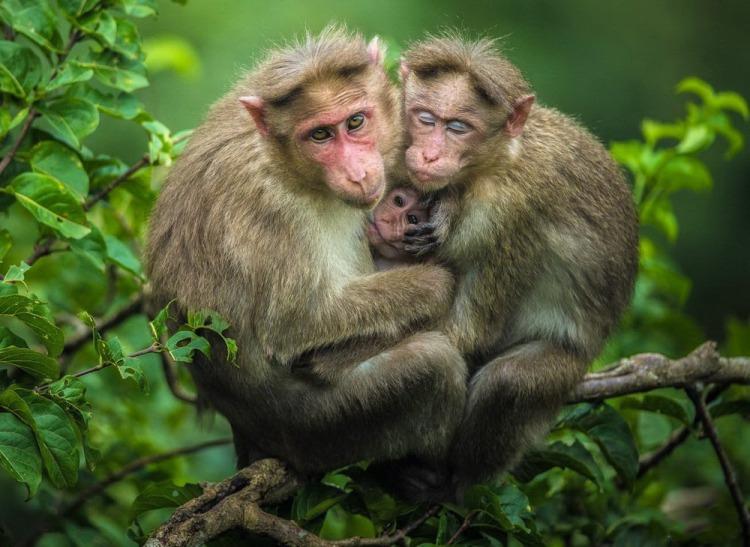 Самые забавные животные на Земле, 50 фото
