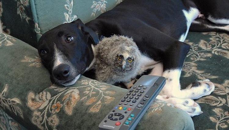 30 фото о необычной дружбе между животными
