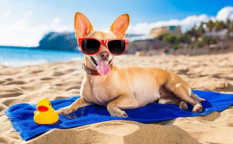 30 животных, которые научат, как нужно проводить лето