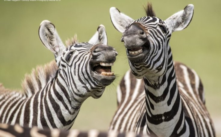 Смешные фото животных, снятые в дикой природе