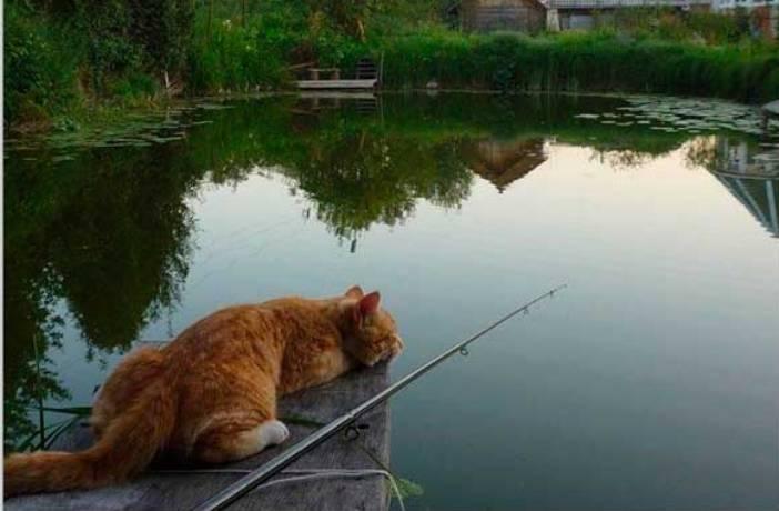 Лучшие моменты, которые удалось запечатлеть на рыбалке