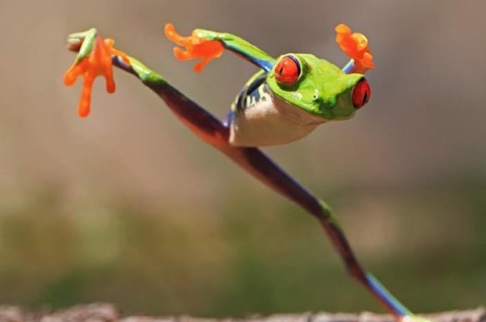 Волшебные макроснимки живой природы