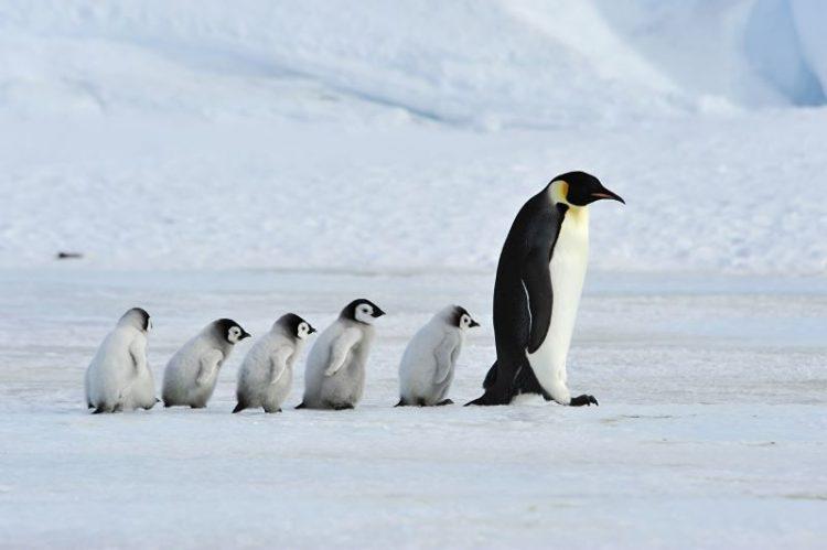 obitateli Arktiki i Antarktiki
