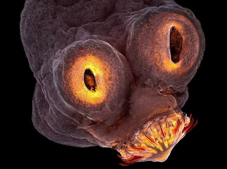 25 впечатляющих фото, сделанных с помощью микроскопа