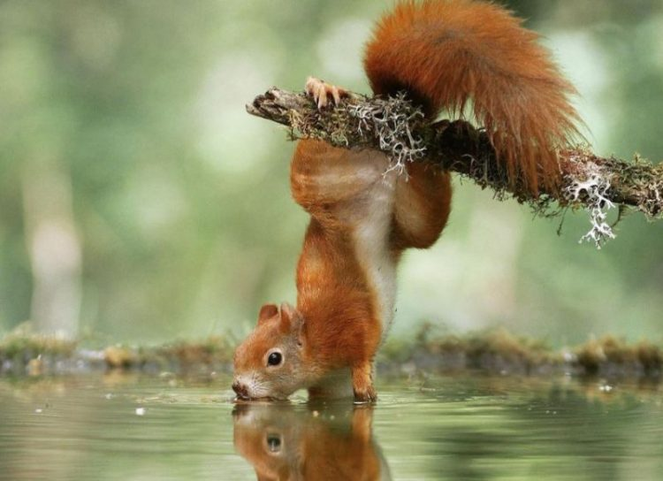 Снимки живой природы, которые вы точно еще не видели