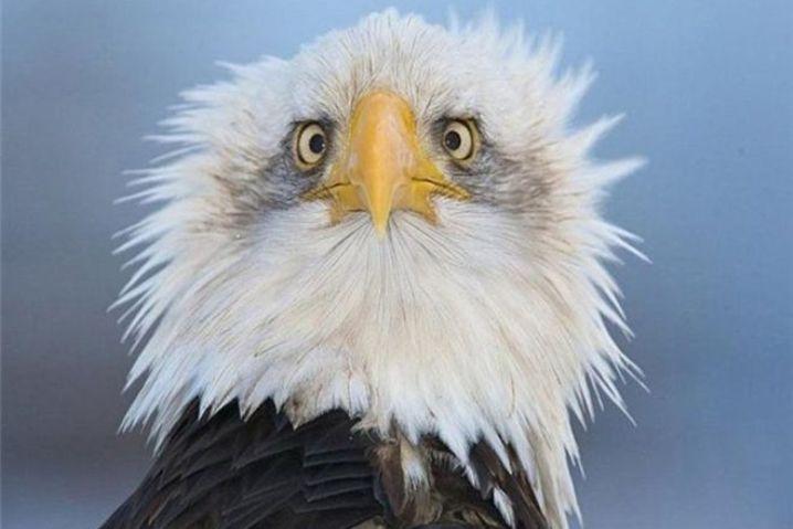 """30 животных, которые всем видом показывают, что """"жизнь не удалась"""""""